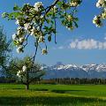 Spring In Alpen - Qaaf [50]: 7-8