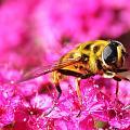 The Bee - An Nahl [16]: 68-69